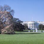 米国ワシントンDCの桜
